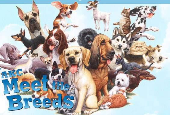 AKC Meet The Breeds Dog and Cat Show