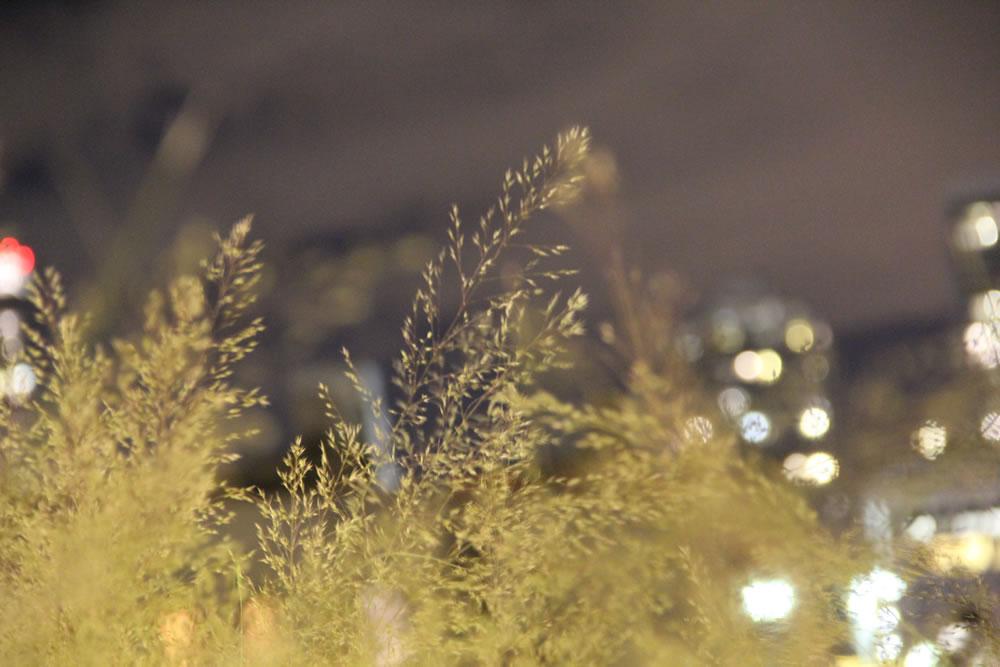 Tree\'s of night